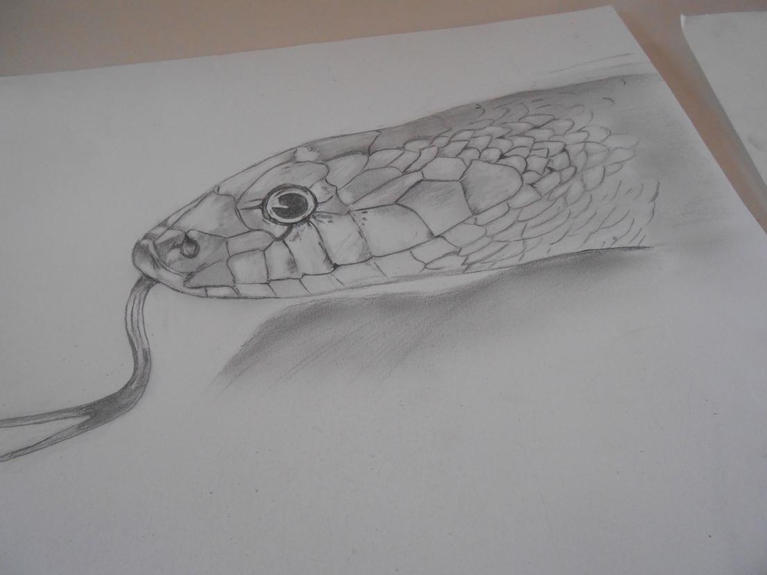 Yasser et la tête de serpent
